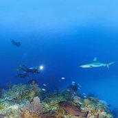 Diving-with-sharks-v(Cuba)