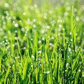 Spring grass wallpaper