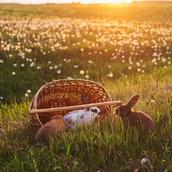 Rabbits at sunset wallpaper